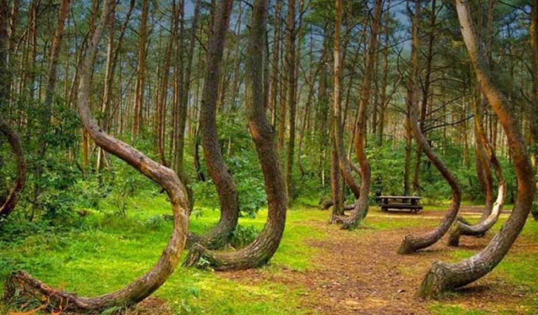 جنگل هویا با کیو