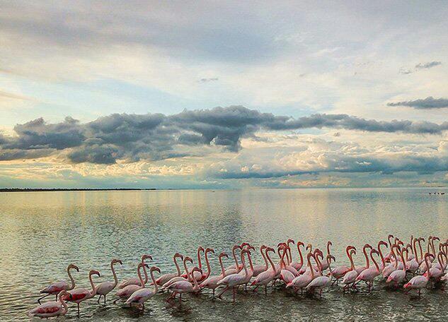 تالاب میانکاله، بهشت بی نظیر پرندگان مهاجر!