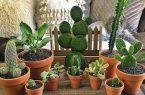 دانستنی های پیش از خرید گل و گیاهان آپارتمانی
