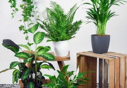 معرفی و نحوه نگهداری گیاهان آپارتمانی