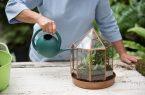 راهکارهایی برای نگهداری بهتر گل و گیاهان در منزل